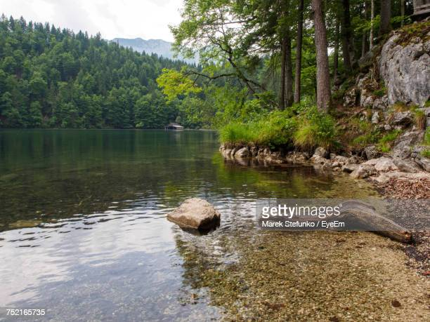 scenic view of lake in forest against sky - marek stefunko stockfoto's en -beelden