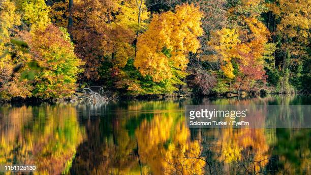 scenic view of lake in forest during autumn - solomon turkel stock pictures, royalty-free photos & images