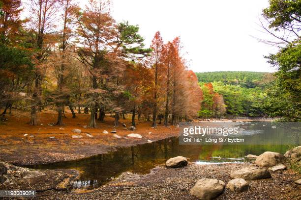 scenic view of lake in forest during autumn - ureshino saga stock pictures, royalty-free photos & images