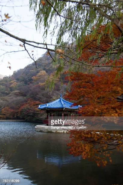 scenic view of lake in forest during autumn - jeonju stock photos and pictures