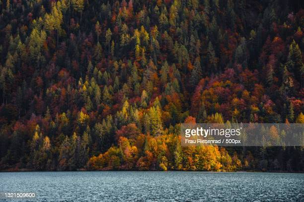 scenic view of lake in forest during autumn,austria - frau photos et images de collection