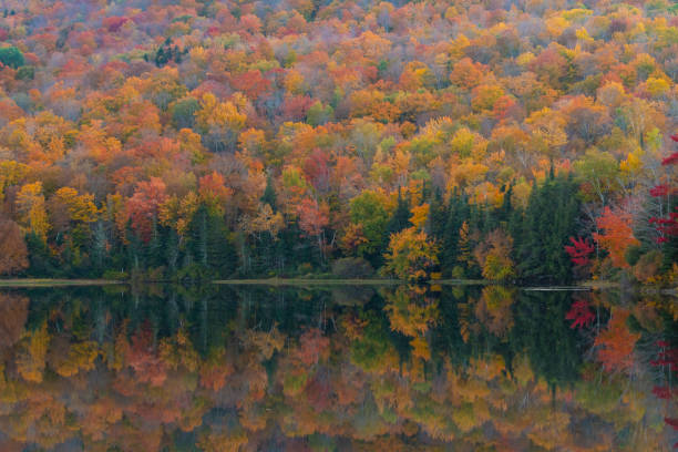 Scenic view of lake in forest during autumn,New Hampshire,United States,USA