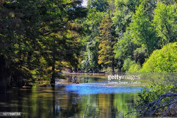 scenic view of lake in forest - sydney ストックフォトと画像