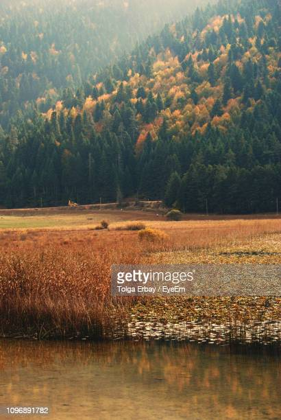 scenic view of lake in forest - tolga erbay stock photos and pictures