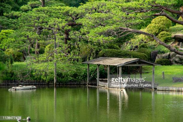 scenic view of lake in forest - naruto stock photos and pictures