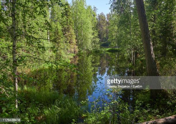 scenic view of lake in forest - teemu tretjakov stock pictures, royalty-free photos & images