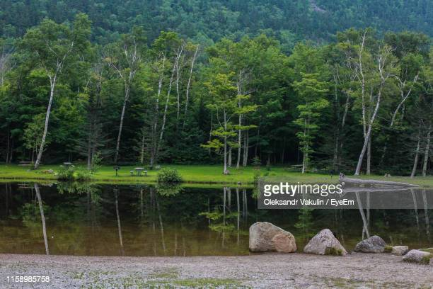 scenic view of lake in forest - oleksandr vakulin stock pictures, royalty-free photos & images