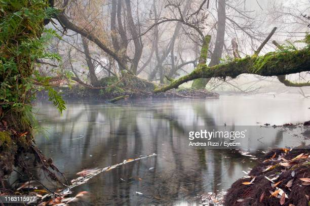 scenic view of lake in forest - andrea rizzi stockfoto's en -beelden