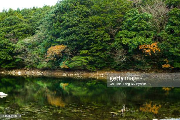 scenic view of lake in forest - ureshino saga stock pictures, royalty-free photos & images