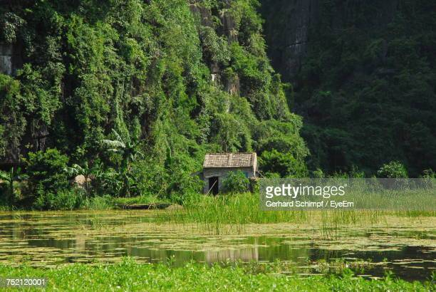 scenic view of lake in forest - gerhard schimpf stock pictures, royalty-free photos & images