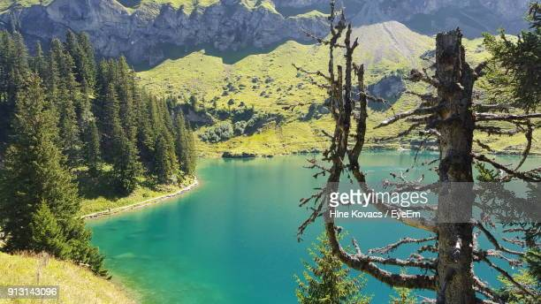 scenic view of lake in forest - vaud canton stock photos and pictures