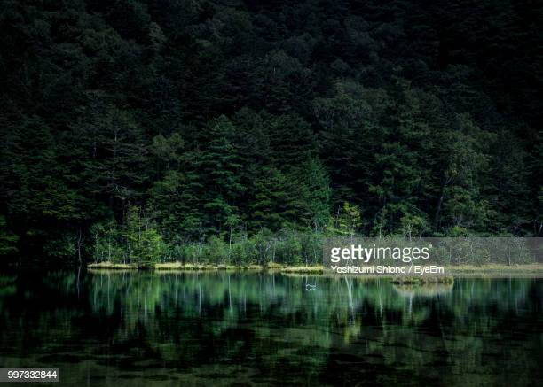 scenic view of lake in forest - 諏訪市 ストックフォトと画像