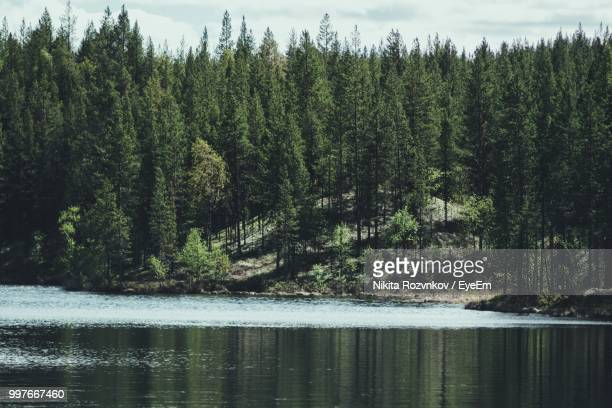 scenic view of lake in forest - pine woodland stock pictures, royalty-free photos & images