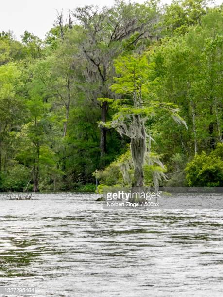 scenic view of lake in forest,homosassa,florida,united states,usa - norbert zingel stock-fotos und bilder