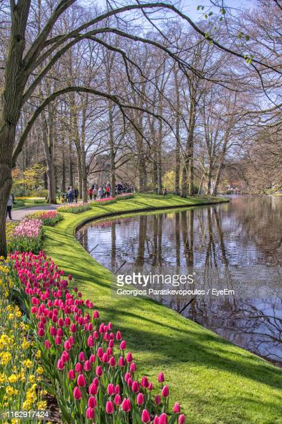scenic view of lake in park - keukenhof gardens stock pictures, royalty-free photos & images