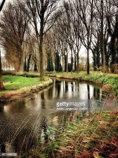 scenic view of lake passing through forest trees - damme stock pictures, royalty-free photos & images