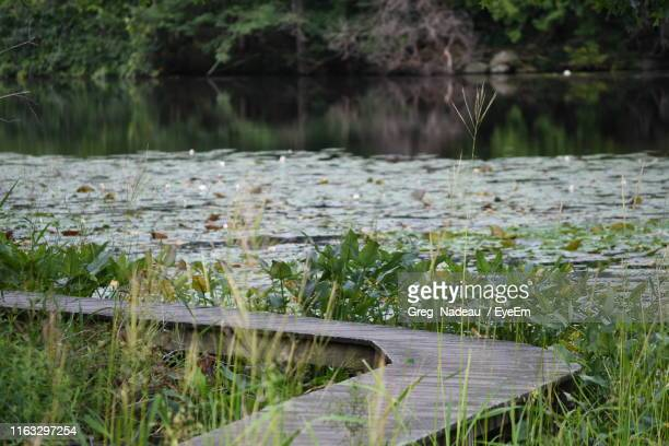 scenic view of lake - greg nadeau stock pictures, royalty-free photos & images