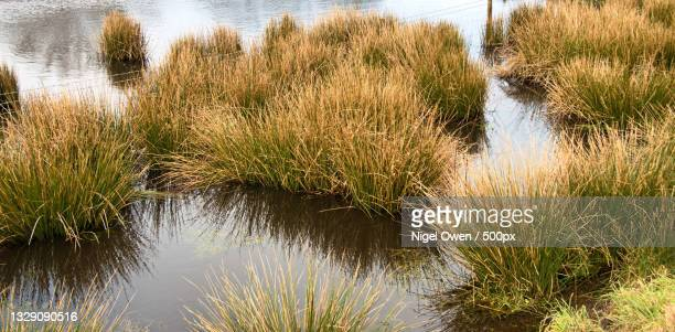 scenic view of lake - nigel owen stock pictures, royalty-free photos & images