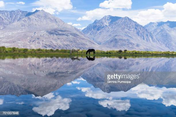 Scenic view of lake with mountain and horse in Leh Ladakh, india