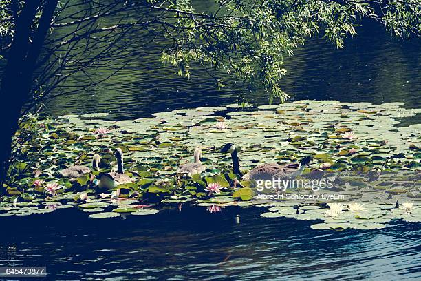 scenic view of lake with trees in background - albrecht schlotter foto e immagini stock