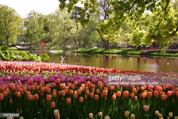 scenic view of lake with trees in background - keukenhof gardens stock pictures, royalty-free photos & images
