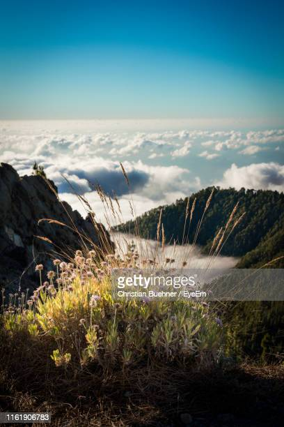 scenic view of land against sky - el teide national park stock pictures, royalty-free photos & images