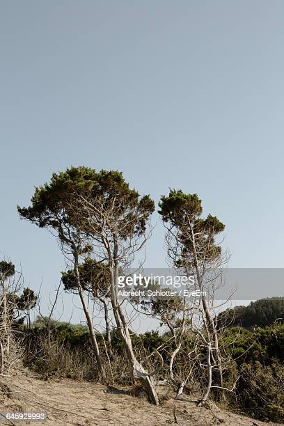 scenic view of landscape against blue sky - albrecht schlotter stock photos and pictures
