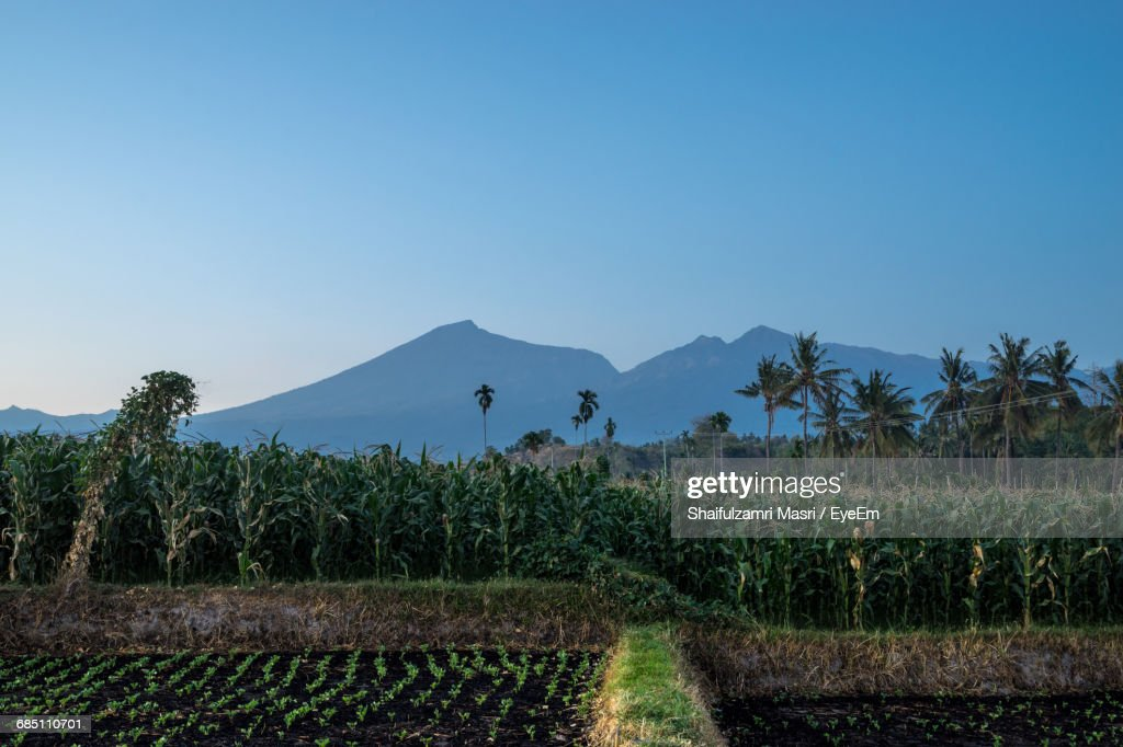 Scenic View Of Landscape Against Clear Blue Sky : Stock Photo