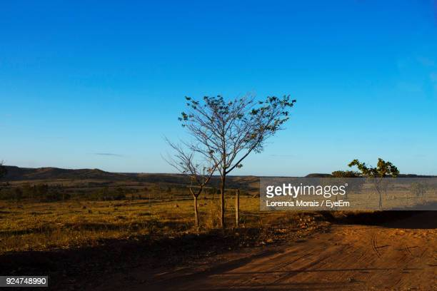 scenic view of landscape against clear blue sky - lorenna morais - fotografias e filmes do acervo