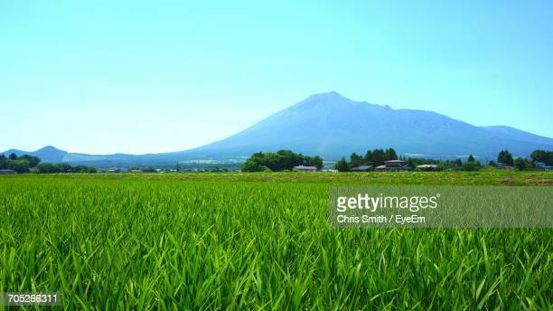 scenic view of landscape against clear sky - 水田 ストックフォトと画像