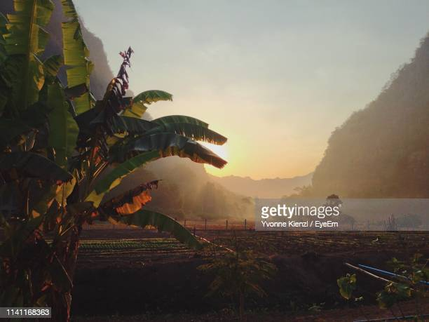 scenic view of landscape against sky at sunset - banana tree stock pictures, royalty-free photos & images
