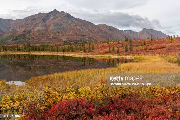 scenic view of landscape against sky during autumn,denali,alaska,united states,usa - klein stock pictures, royalty-free photos & images