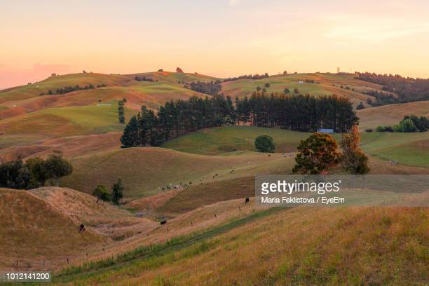 scenic view of landscape against sky during sunset - hamilton new zealand stock pictures, royalty-free photos & images
