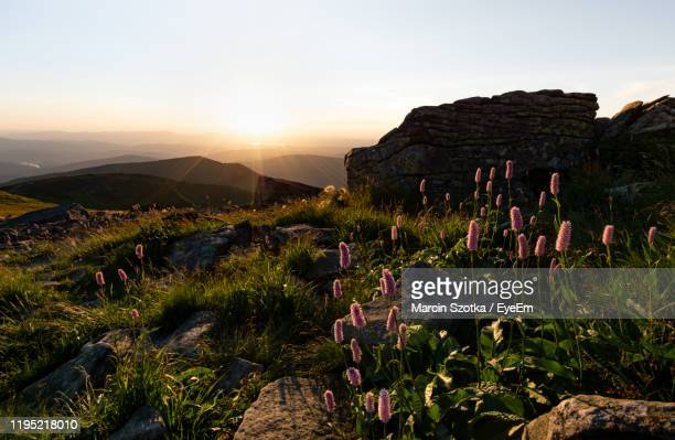 scenic view of landscape against sky during sunset - babia góra mountain stock pictures, royalty-free photos & images