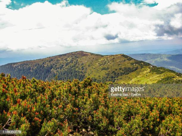 scenic view of landscape against sky - babia góra mountain stock pictures, royalty-free photos & images