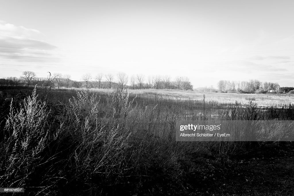 Scenic View Of Landscape Against Sky : Foto de stock