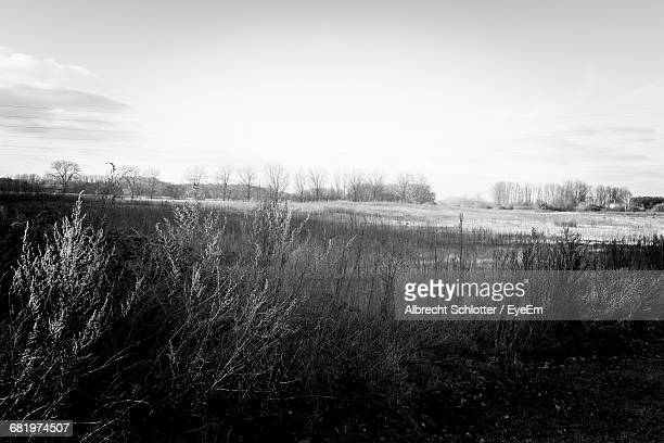 scenic view of landscape against sky - albrecht schlotter stock photos and pictures