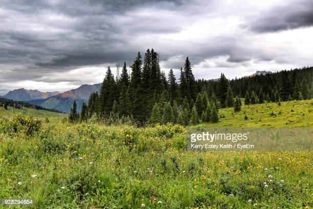 scenic view of landscape against sky - kerry estey keith stock photos and pictures