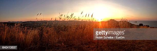 scenic view of landscape at sunset - gisborne stock photos and pictures
