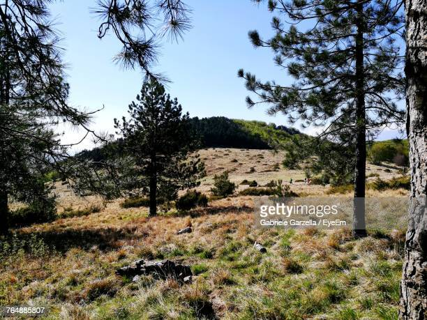 scenic view of landscape - massa stock pictures, royalty-free photos & images