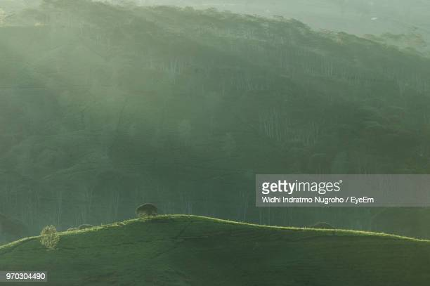 scenic view of landscape - bandung stock pictures, royalty-free photos & images