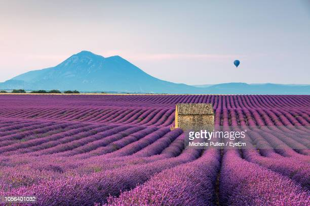 scenic view of lavender field by mountains against sky - provence alpes cote d'azur stock photos and pictures