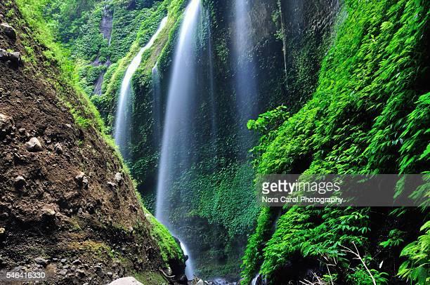 Scenic View Of Madakaripura Waterfall