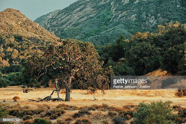 scenic view of malibu creek state park - calabasas stock photos and pictures