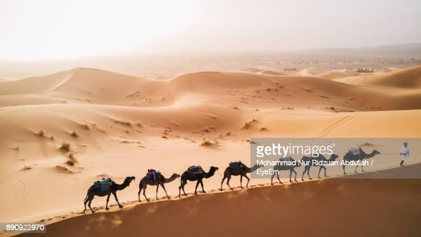 Scenic View Of Man With Camels In Desert Against Clear Sky