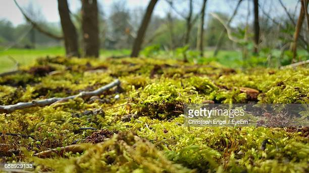 scenic view of moss in forest - moos stock-fotos und bilder