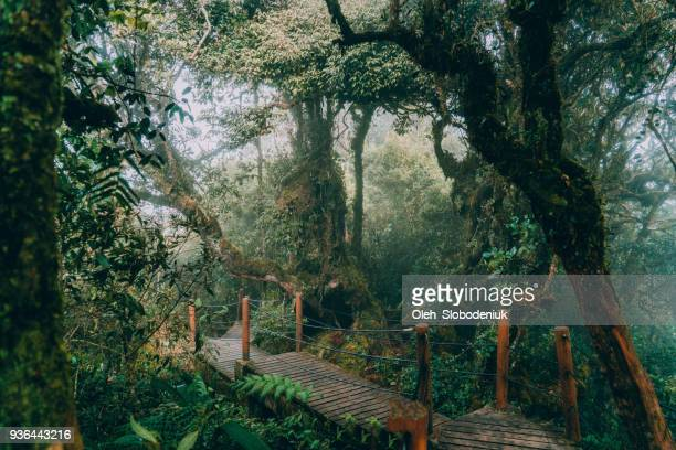 scenic view of mossy forest - malaysia stock pictures, royalty-free photos & images