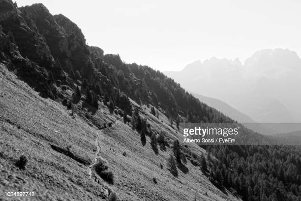 scenic view of mountains against clear sky - pinaceae stock pictures, royalty-free photos & images