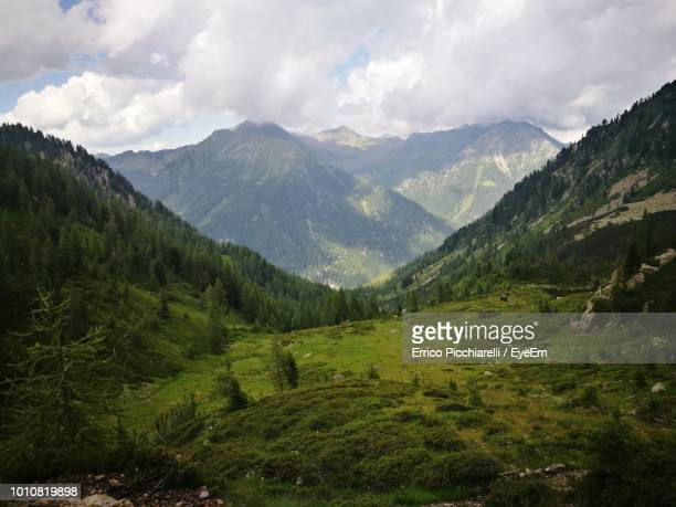 scenic view of mountains against sky - pinaceae stock pictures, royalty-free photos & images