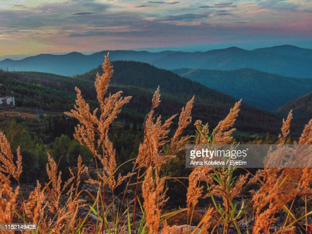 scenic view of mountains against sky - krasnoyarsk stock pictures, royalty-free photos & images